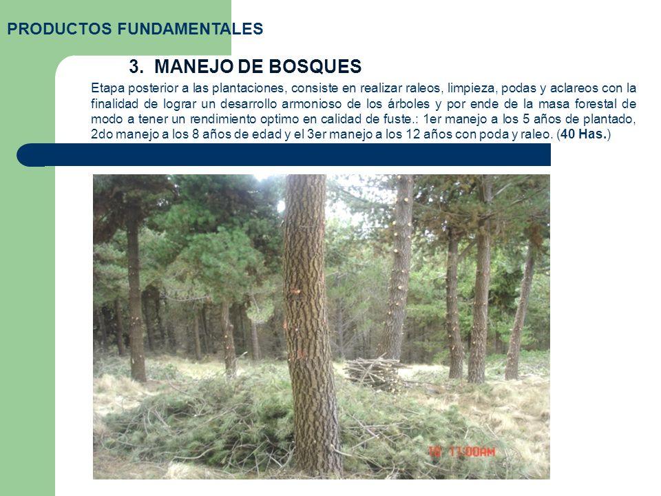 3. MANEJO DE BOSQUES PRODUCTOS FUNDAMENTALES Etapa posterior a las plantaciones, consiste en realizar raleos, limpieza, podas y aclareos con la finali