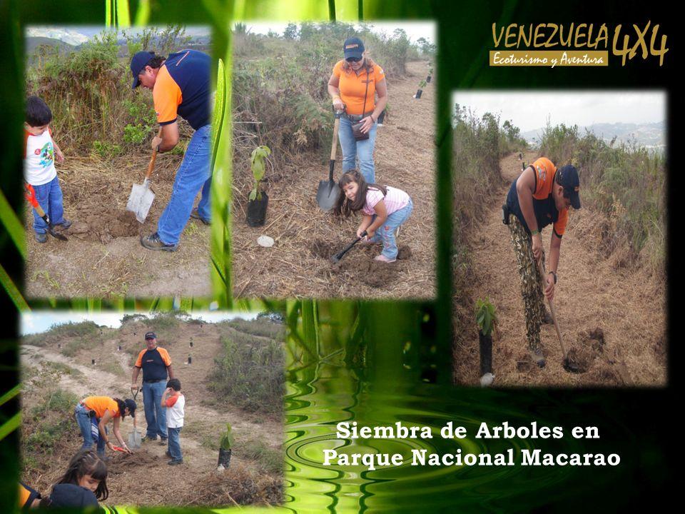 Siembra de Arboles en Parque Nacional Macarao