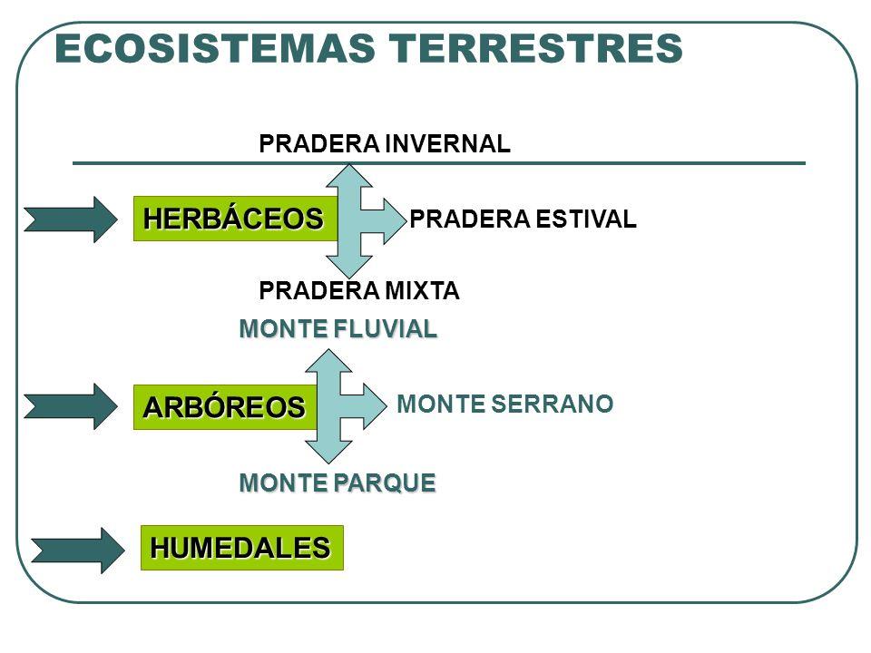 ECOSISTEMAS TERRESTRES HERBÁCEOS ARBÓREOS HUMEDALES PRADERA INVERNAL PRADERA ESTIVAL PRADERA MIXTA MONTE FLUVIAL MONTE SERRANO MONTE PARQUE