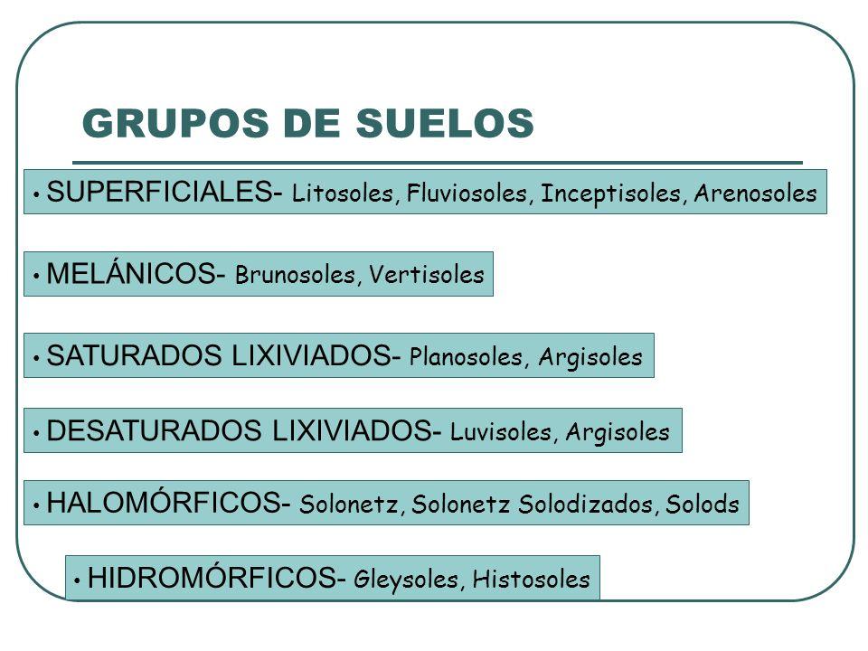GRUPOS DE SUELOS SUPERFICIALES- Litosoles, Fluviosoles, Inceptisoles, Arenosoles MELÁNICOS- Brunosoles, Vertisoles SATURADOS LIXIVIADOS- Planosoles, Argisoles DESATURADOS LIXIVIADOS- Luvisoles, Argisoles HIDROMÓRFICOS- Gleysoles, Histosoles HALOMÓRFICOS- Solonetz, Solonetz Solodizados, Solods