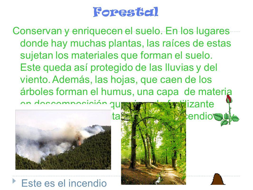 Forestal Conservan y enriquecen el suelo. En los lugares donde hay muchas plantas, las raíces de estas sujetan los materiales que forman el suelo. Est