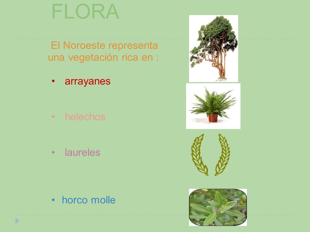 El Noroeste representa una vegetación rica en : arrayanes helechos laureles horco molle FLORA