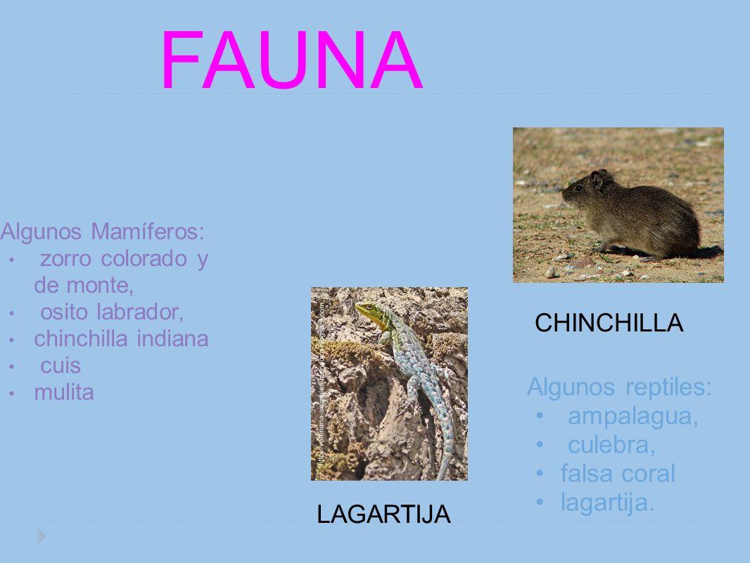 Algunos Mamíferos: zorro colorado y de monte, osito labrador, chinchilla indiana cuis mulita FAUNA Algunos reptiles: ampalagua, culebra, falsa coral l