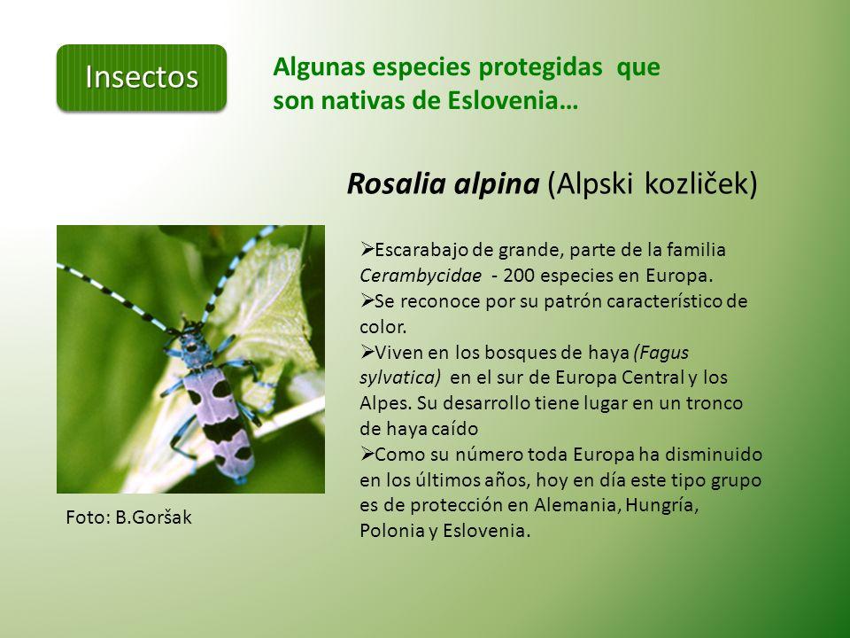 Punto caliente de Europa Eslovenia es uno de los países con mayor biodiversidad en la Unión Europea.