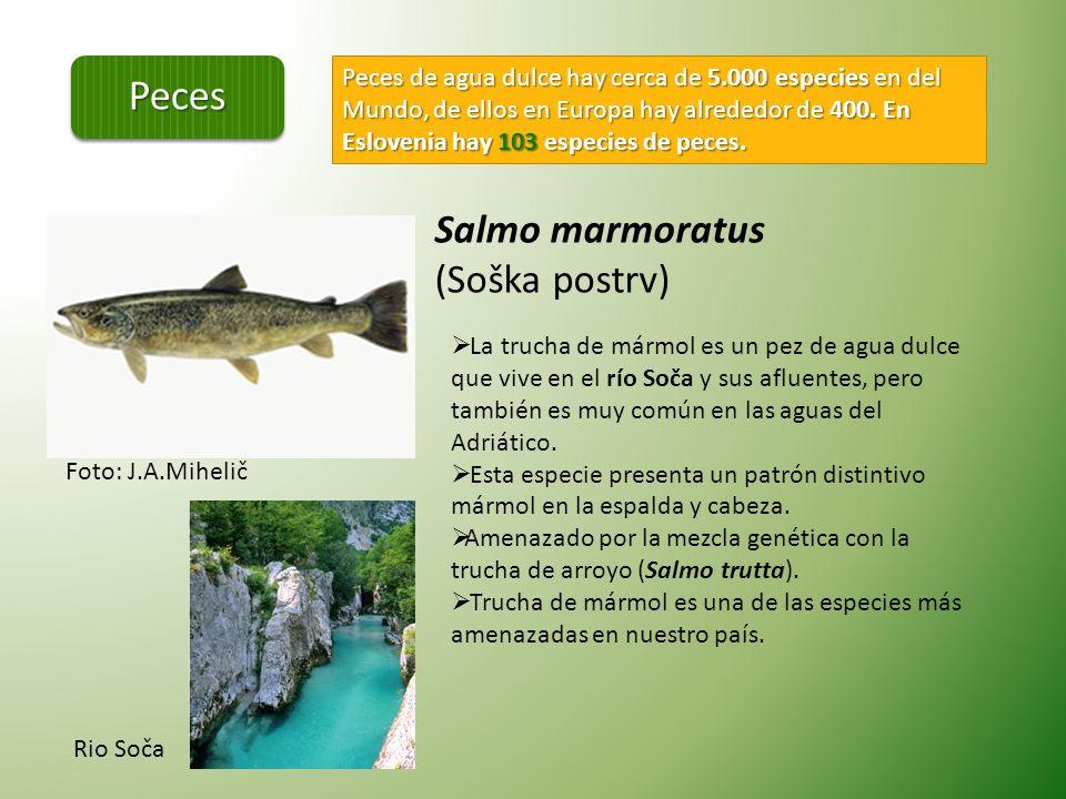 Lycaena dispar Mariposas (Lepidoptera ) Son el grupo de insectos mas frecuente.