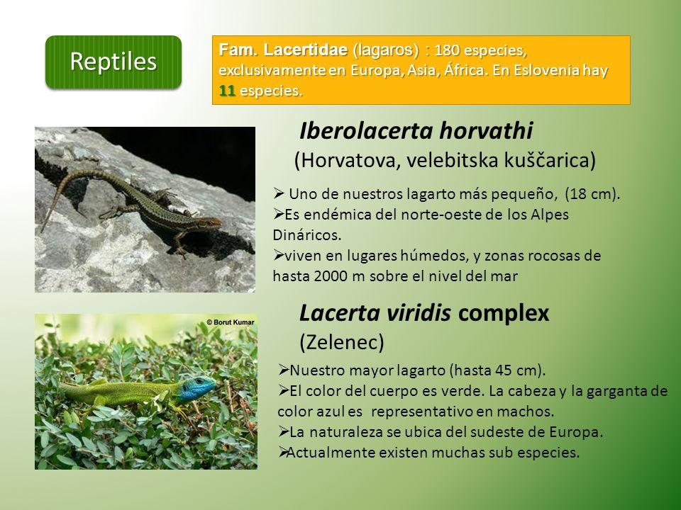 En Eslovenia, se describen 25 especies nativas y tres subespecies de reptiles. Todas las especies nativas están protegidos por la ley. Emys orbiculari