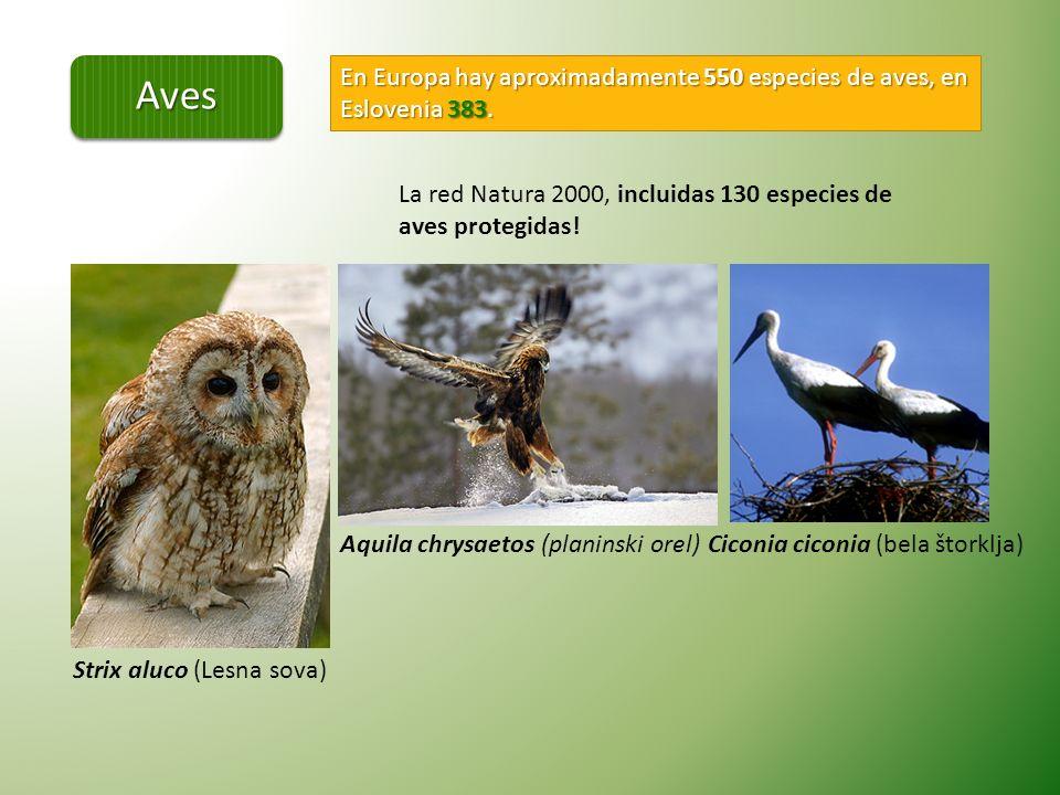 SERPENTES: En el mundo hay aprox.3000 especies.