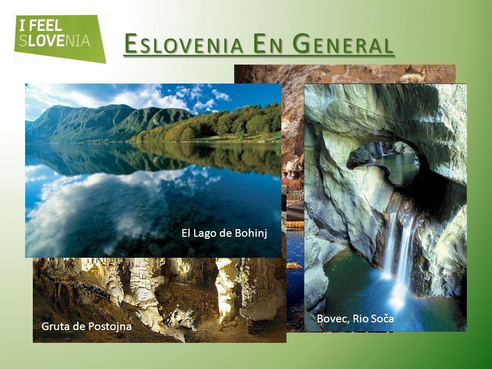 Los bosques de Eslovenia Los bosques cubren más de la mitad del territorio esloveno (58%) 71 especies de árboles: - CONIFERAS (10 especies), - MADERA (61 especies) Picea abies, El Abeto rojo (Navadna smreka) Abies alba, El Abeto blanco (navadna jelka) Fagus sylvatica, El Haya común (bukev) Quercus robur, el Roble común (hrast dob)