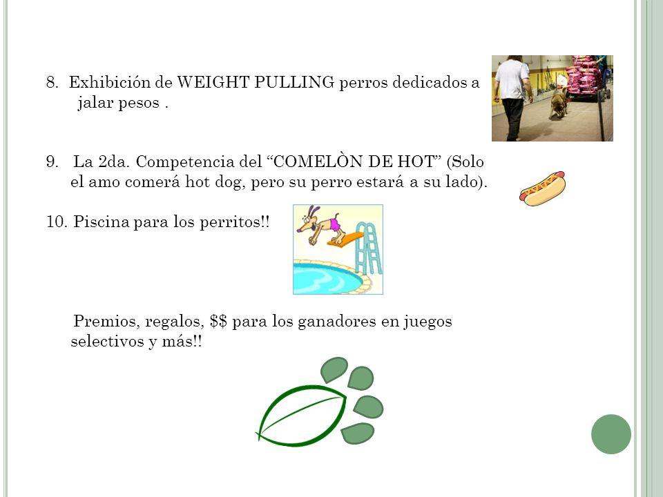 8.Exhibición de WEIGHT PULLING perros dedicados a jalar pesos.