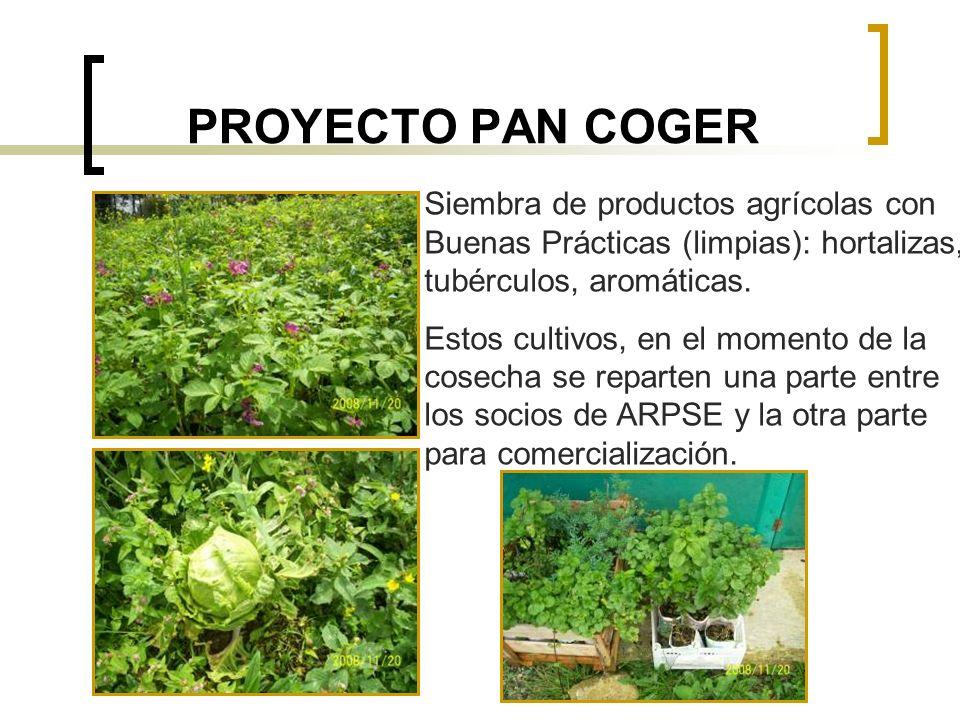 PROYECTO PAN COGER Siembra de productos agrícolas con Buenas Prácticas (limpias): hortalizas, tubérculos, aromáticas. Estos cultivos, en el momento de