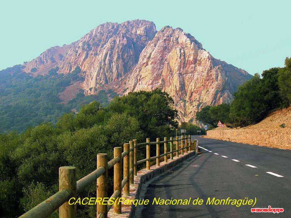 CACERES(Parque Nacional de Monfragüe)