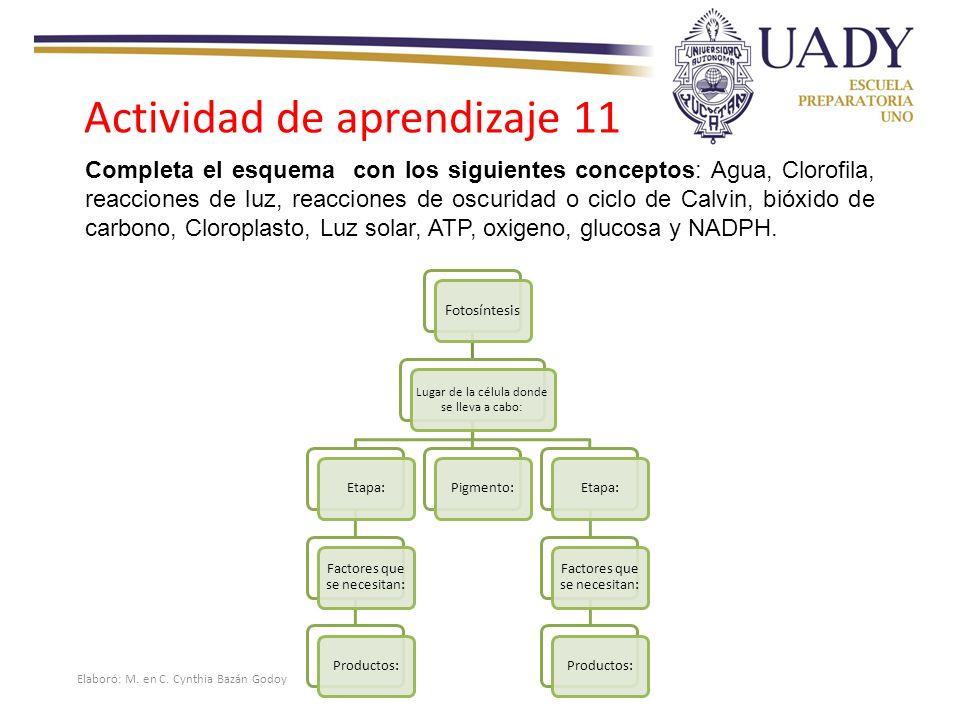 Actividad de aprendizaje 11 Completa el esquema con los siguientes conceptos: Agua, Clorofila, reacciones de luz, reacciones de oscuridad o ciclo de Calvin, bióxido de carbono, Cloroplasto, Luz solar, ATP, oxigeno, glucosa y NADPH.