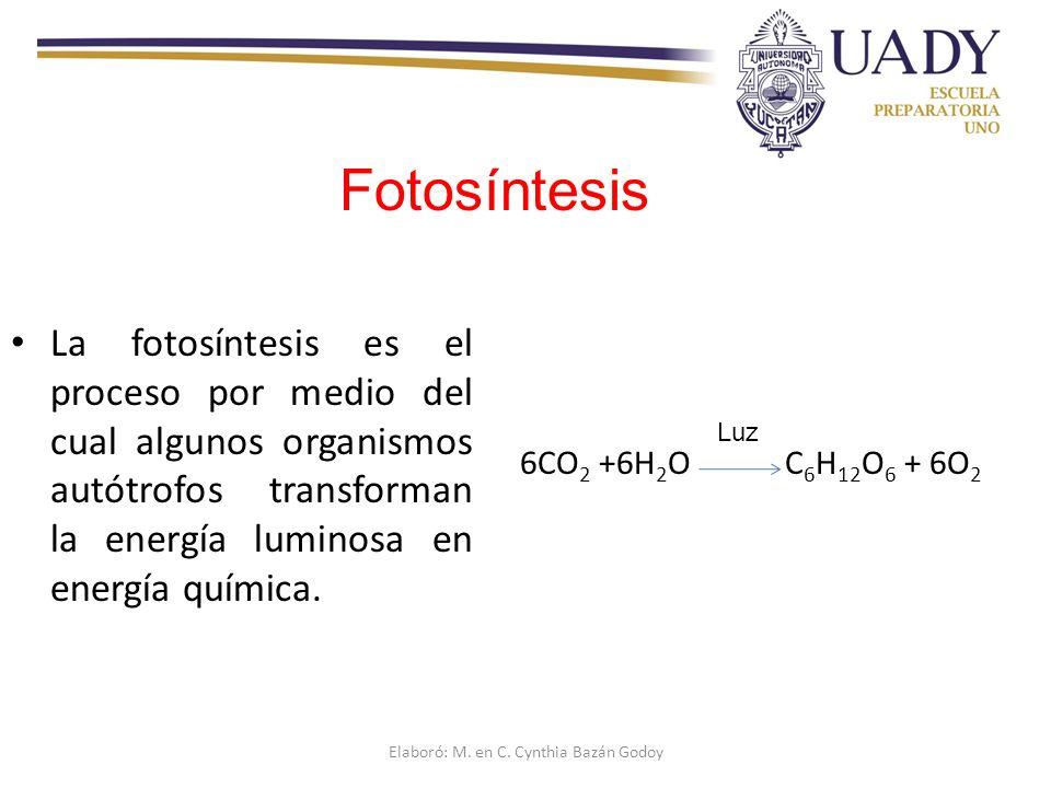 La fotosíntesis es el proceso por medio del cual algunos organismos autótrofos transforman la energía luminosa en energía química.