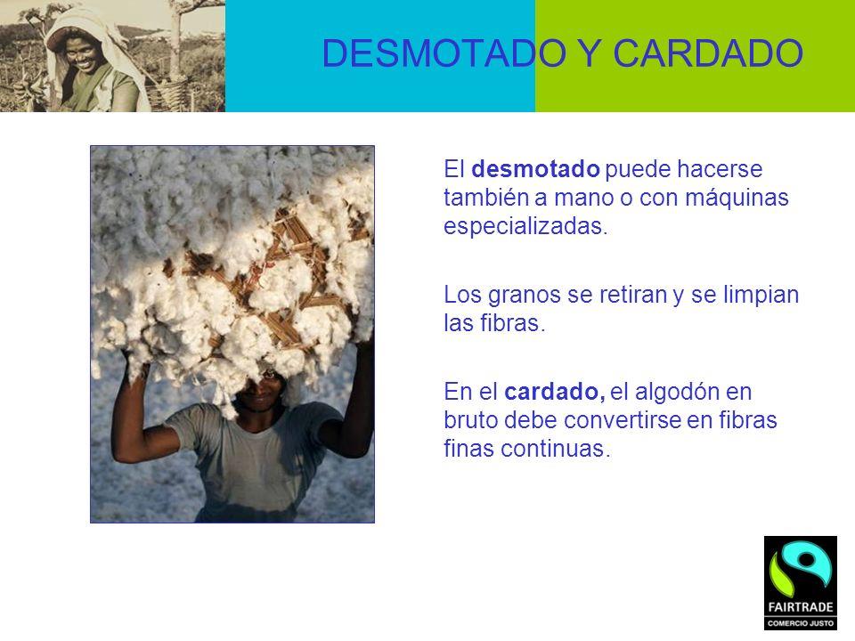 DESMOTADO Y CARDADO El desmotado puede hacerse también a mano o con máquinas especializadas. Los granos se retiran y se limpian las fibras. En el card