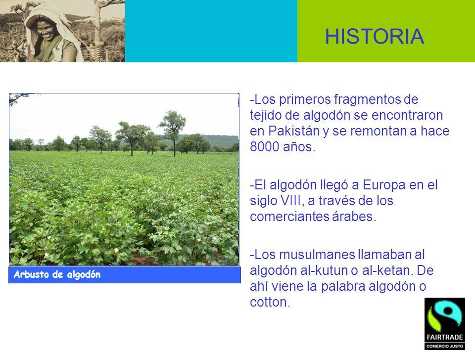 -Los primeros fragmentos de tejido de algodón se encontraron en Pakistán y se remontan a hace 8000 años. -El algodón llegó a Europa en el siglo VIII,
