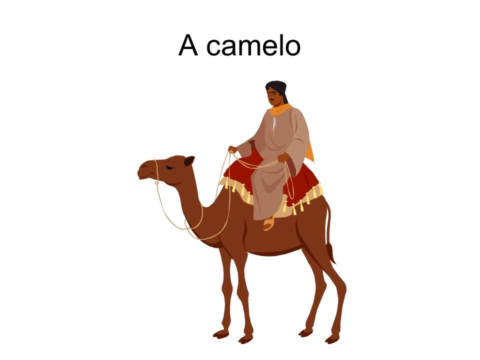A camelo
