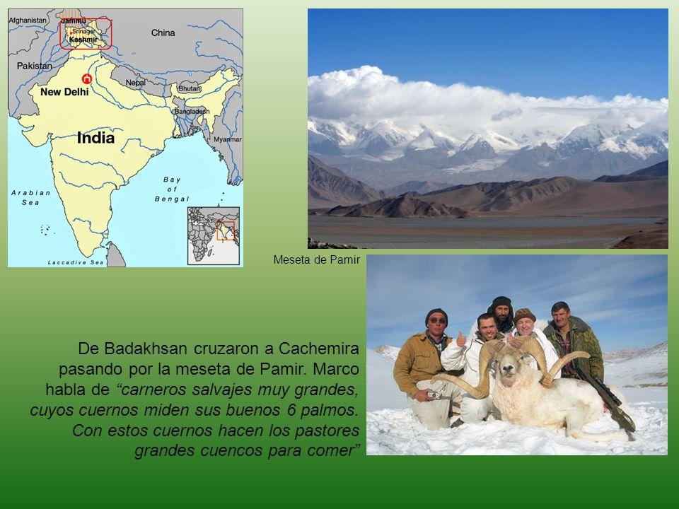 De Badakhsan cruzaron a Cachemira pasando por la meseta de Pamir. Marco habla de carneros salvajes muy grandes, cuyos cuernos miden sus buenos 6 palmo