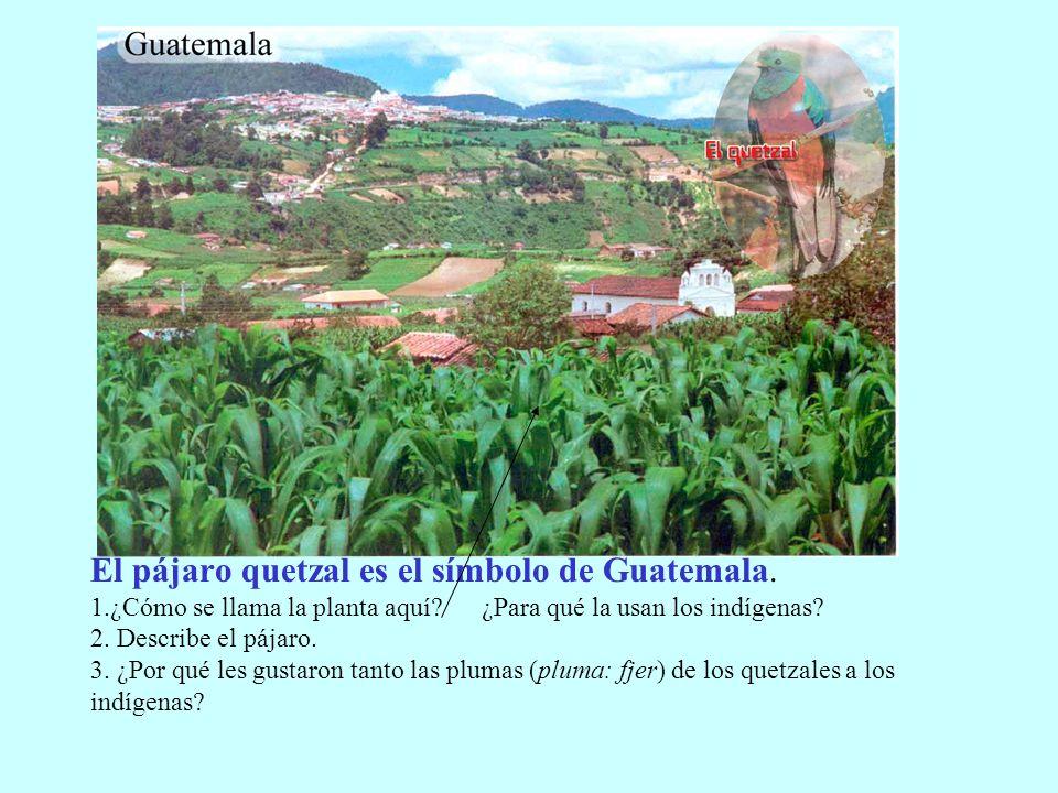 El pájaro quetzal es el símbolo de Guatemala. 1.¿Cómo se llama la planta aquí? ¿Para qué la usan los indígenas? 2. Describe el pájaro. 3. ¿Por qué les
