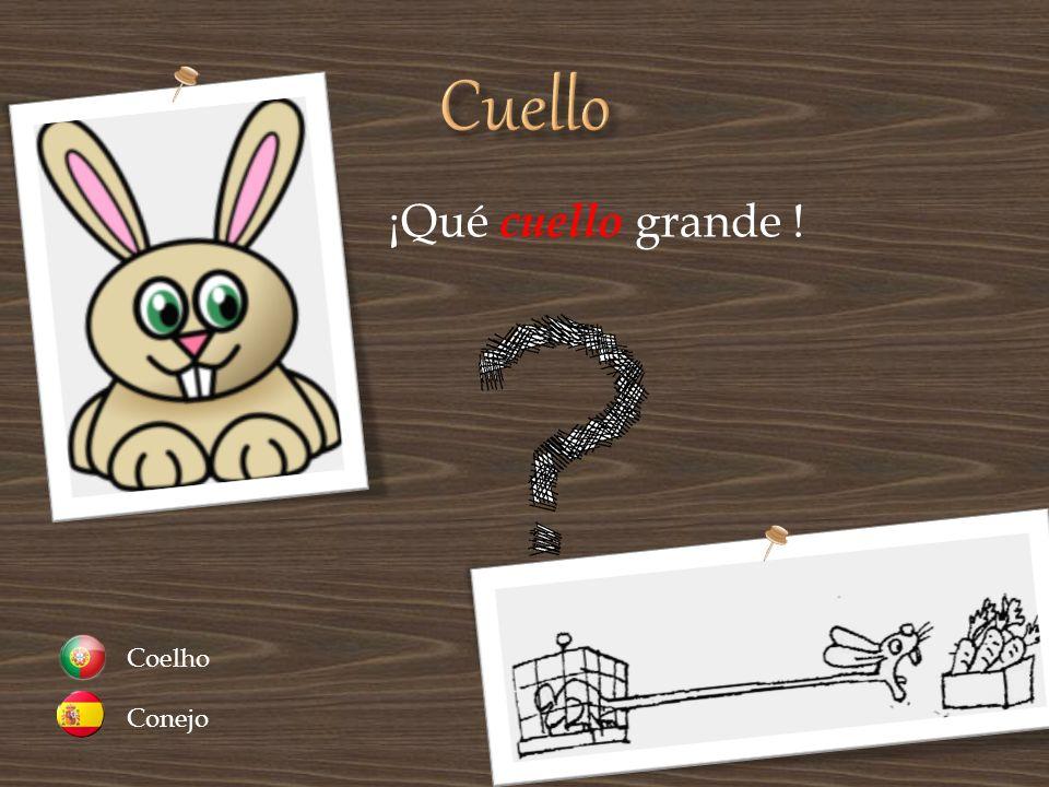 ¡Qué cuello grande ! Conejo Coelho