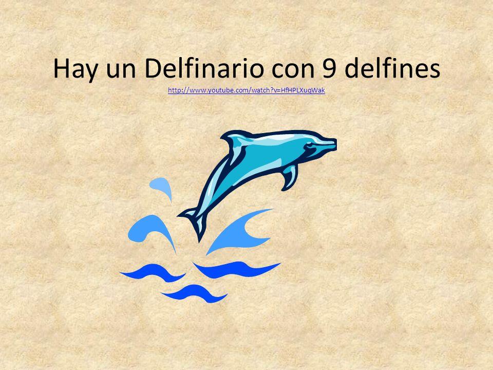 Hay un Delfinario con 9 delfines http://www.youtube.com/watch?v=HfHPLXuqWak http://www.youtube.com/watch?v=HfHPLXuqWak