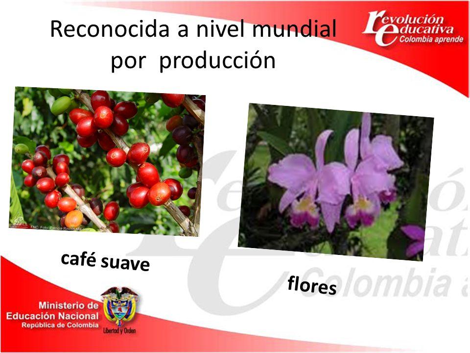 Reconocida a nivel mundial por producción café suave flores