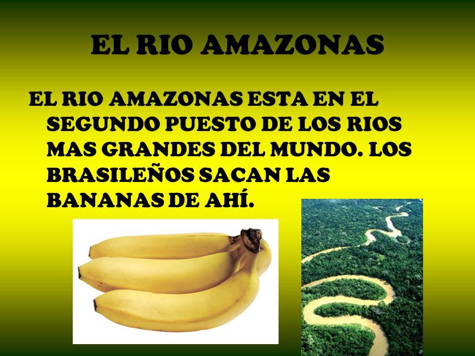 EL RIO AMAZONAS EL RIO AMAZONAS ESTA EN EL SEGUNDO PUESTO DE LOS RIOS MAS GRANDES DEL MUNDO. LOS BRASILEÑOS SACAN LAS BANANAS DE AHÍ.