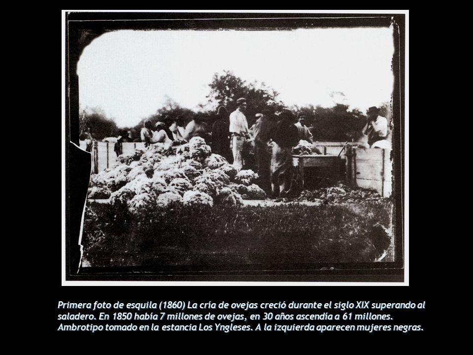 Primera foto de esquila (1860) La cría de ovejas creció durante el siglo XIX superando al saladero. En 1850 había 7 millones de ovejas, en 30 años asc