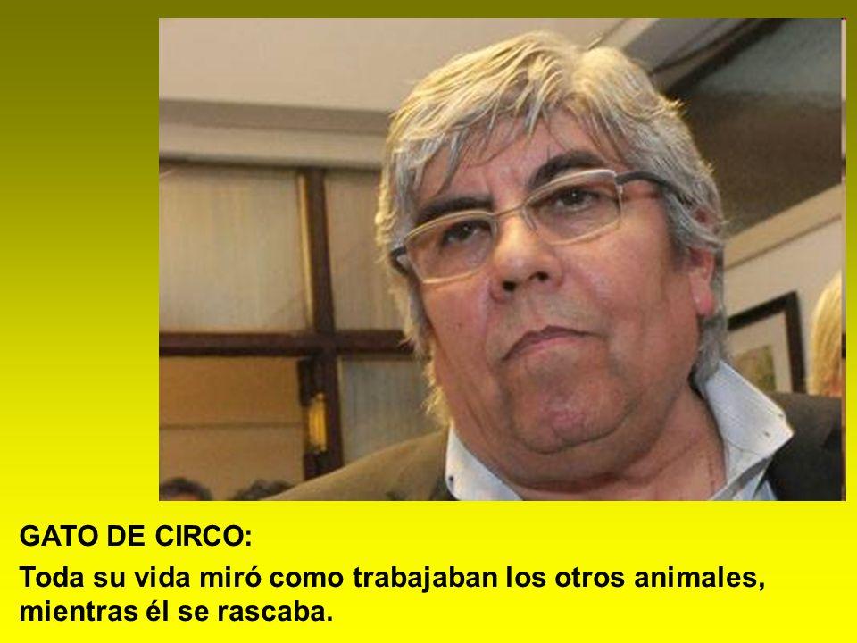 GATO DE CIRCO: Toda su vida miró como trabajaban los otros animales, mientras él se rascaba.