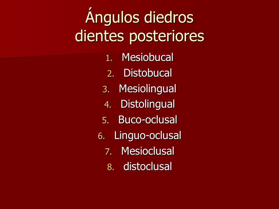 Ángulos diedros dientes posteriores 1. Mesiobucal 2. Distobucal 3. Mesiolingual 4. Distolingual 5. Buco-oclusal 6. Linguo-oclusal 7. Mesioclusal 8. di
