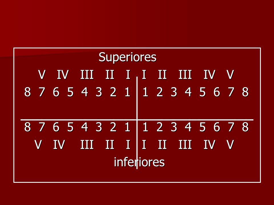Superiores V IV III II I I II III IV V V IV III II I I II III IV V 8 7 6 5 4 3 2 1 1 2 3 4 5 6 7 8 8 7 6 5 4 3 2 1 1 2 3 4 5 6 7 8 V IV III II I I II