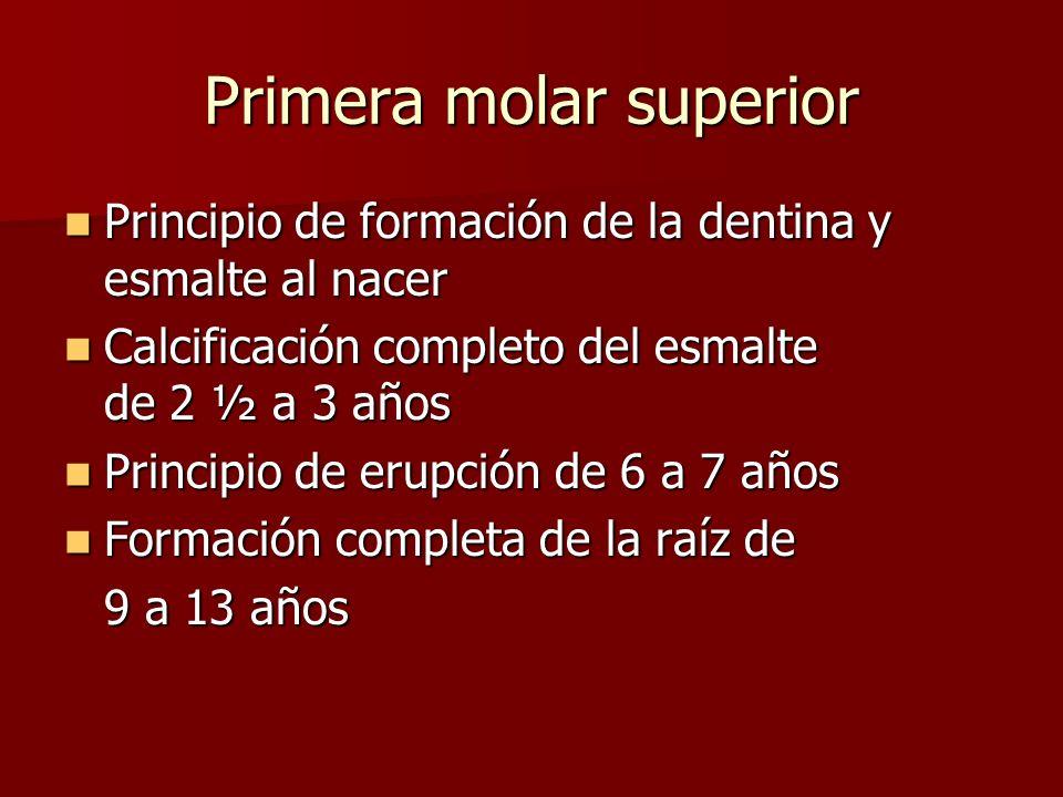 Principio de formación de la dentina y esmalte al nacer Principio de formación de la dentina y esmalte al nacer Calcificación completo del esmalte de