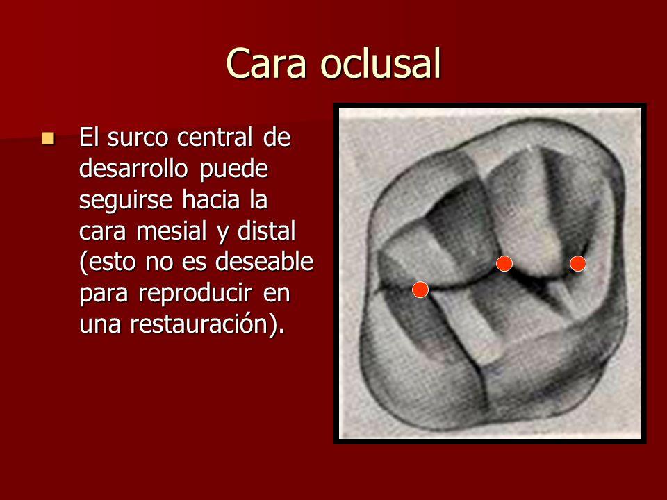 Cara oclusal El surco central de desarrollo puede seguirse hacia la cara mesial y distal (esto no es deseable para reproducir en una restauración). El