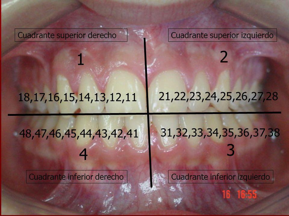 Cuadrante superior derechoCuadrante superior izquierdo Cuadrante inferior derechoCuadrante inferior izquierdo 1 2 4 3 18,17,16,15,14,13,12,11 48,47,46