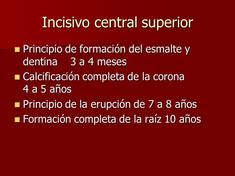 Principio de formación del esmalte y dentina 3 a 4 meses Principio de formación del esmalte y dentina 3 a 4 meses Calcificación completa de la corona