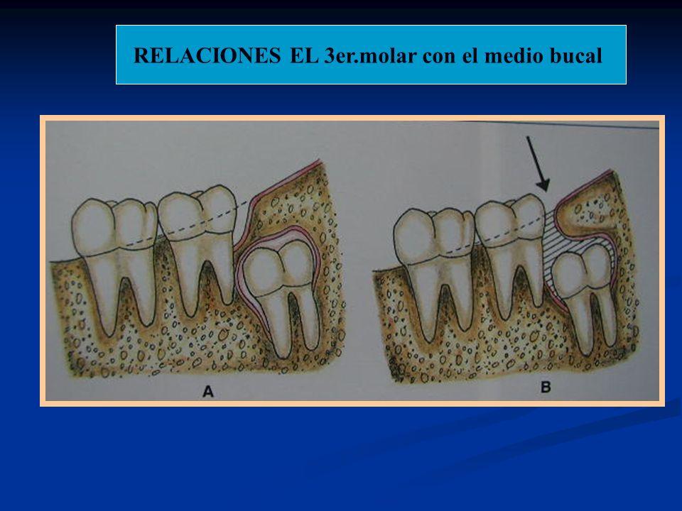 RELACIONES EL 3er.molar con el medio bucal
