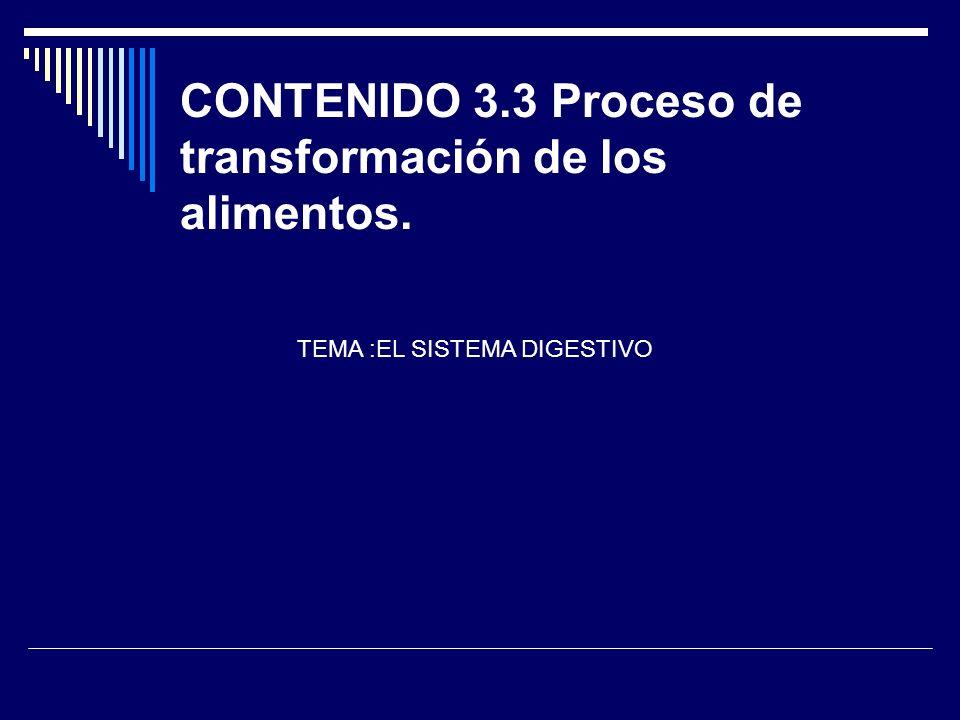 CONTENIDO 3.3 Proceso de transformación de los alimentos. TEMA :EL SISTEMA DIGESTIVO