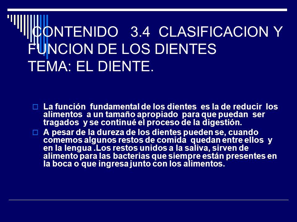 CONTENIDO 3.4 CLASIFICACION Y FUNCION DE LOS DIENTES TEMA: EL DIENTE. La función fundamental de los dientes es la de reducir los alimentos a un tamaño