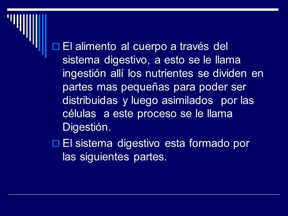 CONTENIDO 3.4 CLASIFICACION Y FUNCION DE LOS DIENTES TEMA: EL DIENTE.