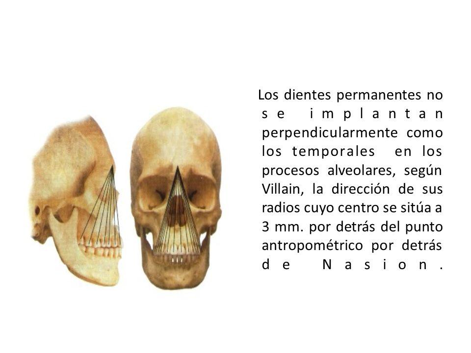 Los dientes permanentes no se implantan perpendicularmente como los temporales en los procesos alveolares, según Villain, la dirección de sus radios c