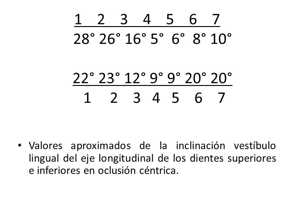 1 2 3 4 5 6 7 28° 26° 16° 5° 6° 8° 10° 22° 23° 12° 9° 9° 20° 20° 1 2 3 4 5 6 7 Valores aproximados de la inclinación vestíbulo lingual del eje longitu