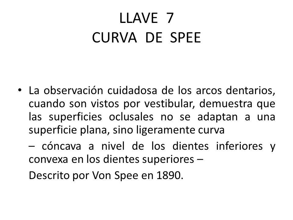 LLAVE 7 CURVA DE SPEE La observación cuidadosa de los arcos dentarios, cuando son vistos por vestibular, demuestra que las superficies oclusales no se