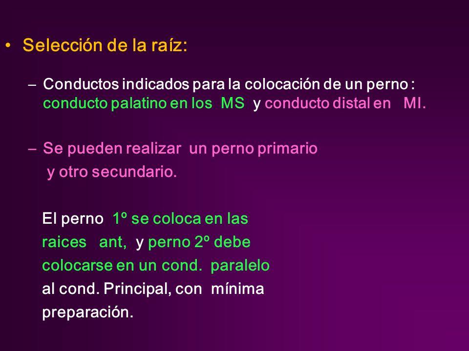Selección de la raíz: –Conductos indicados para la colocación de un perno : conducto palatino en los MS y conducto distal en MI.