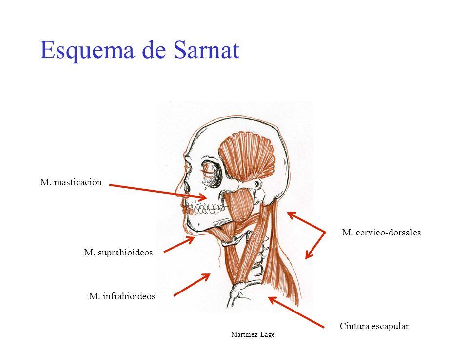 Esquema de Sarnat M. cervico-dorsales Cintura escapular M. masticación M. suprahioideos M. infrahioideos Esquema de Sarnat Martínez-Lage