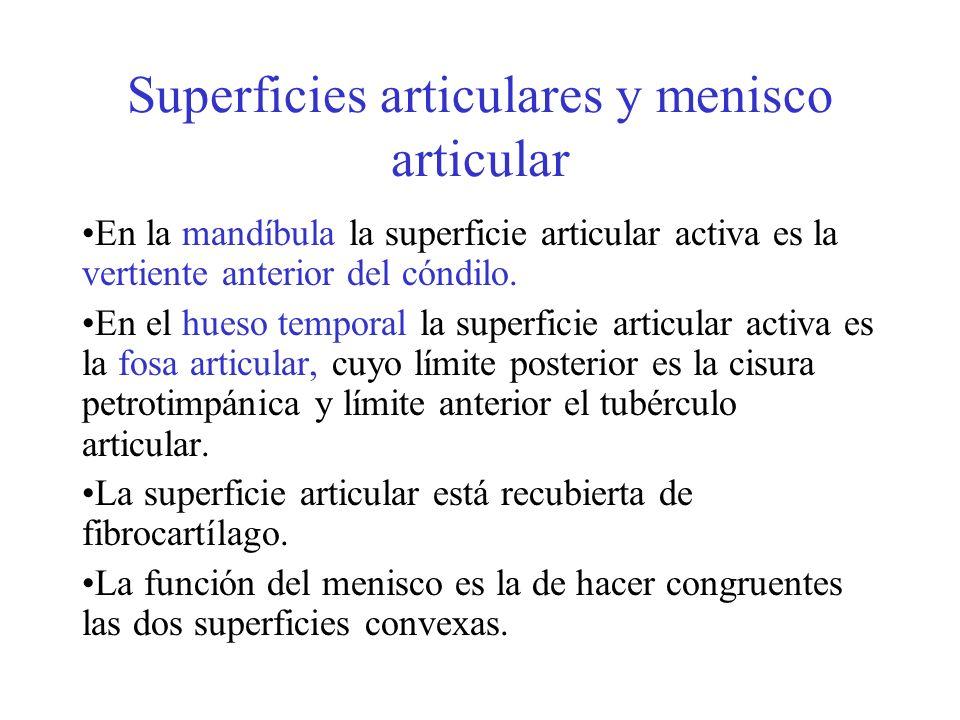Superficies articulares y menisco articular En la mandíbula la superficie articular activa es la vertiente anterior del cóndilo. En el hueso temporal
