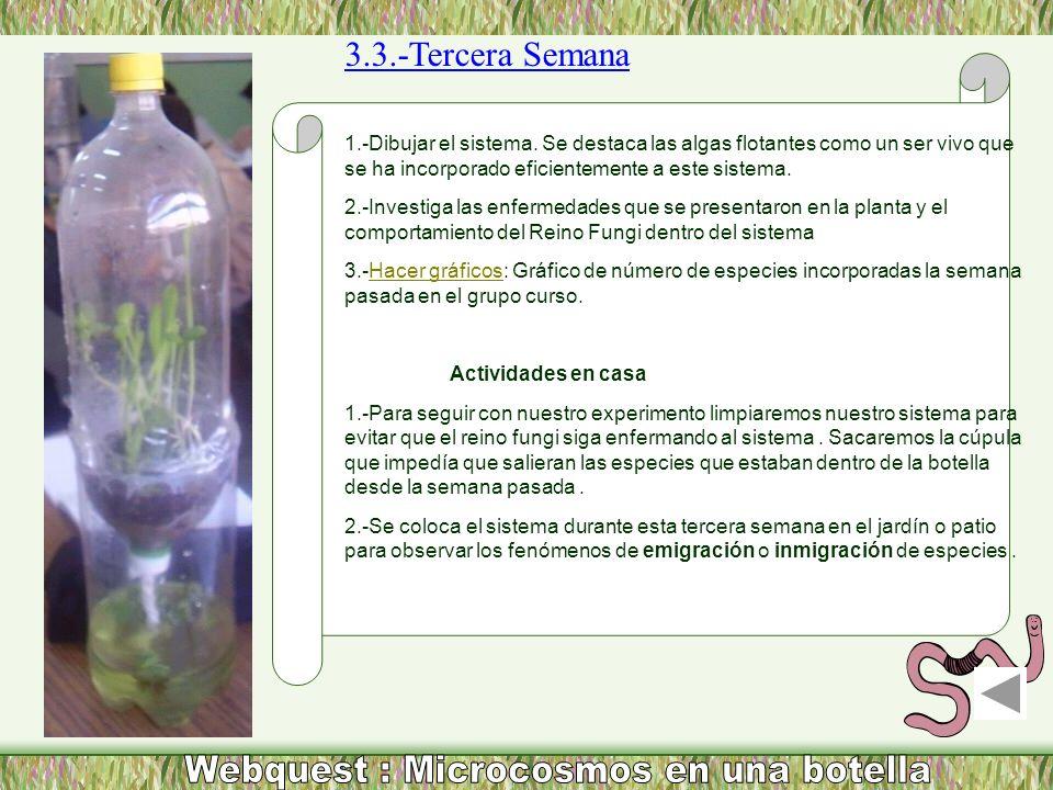 3.3.-Tercera Semana 1.-Dibujar el sistema. Se destaca las algas flotantes como un ser vivo que se ha incorporado eficientemente a este sistema. 2.-Inv