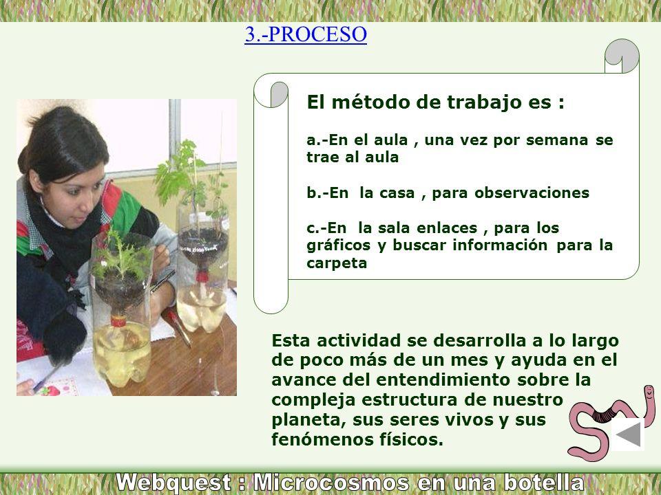 3.-PROCESO Esta actividad se desarrolla a lo largo de poco más de un mes y ayuda en el avance del entendimiento sobre la compleja estructura de nuestr