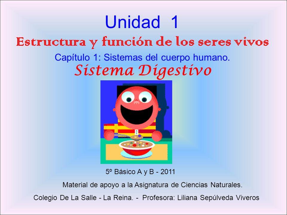 Unidad 1 Estructura y función de los seres vivos Capítulo 1: Sistemas del cuerpo humano. Sistema Digestivo 5º Básico A y B - 2011 Material de apoyo a