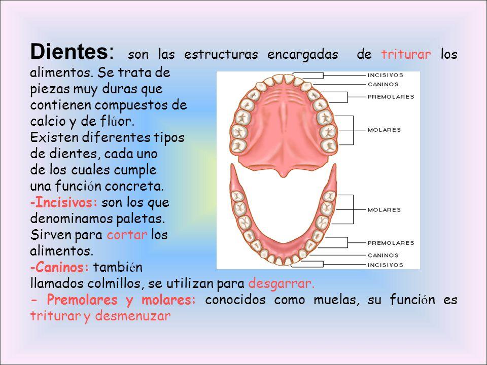 Algunas enfermedades del Sistema Digestivo La gastroenteritis es una inflamación de la membrana interna del intestino causada por una bacteria o parásitos.