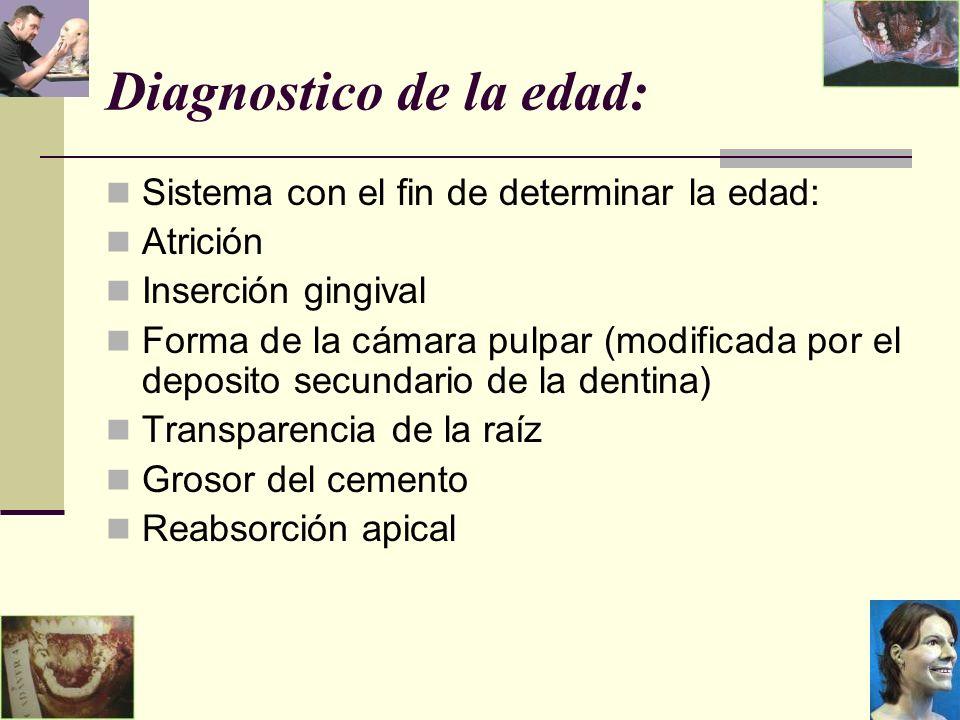 Diagnostico de la edad: Sistema con el fin de determinar la edad: Atrición Inserción gingival Forma de la cámara pulpar (modificada por el deposito secundario de la dentina) Transparencia de la raíz Grosor del cemento Reabsorción apical