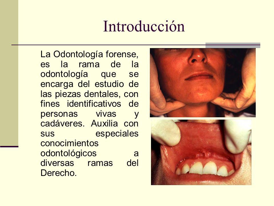 Introducción La Odontología forense, es la rama de la odontología que se encarga del estudio de las piezas dentales, con fines identificativos de personas vivas y cadáveres.